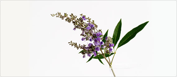 What women need to know about the vitex agnus castus fruit