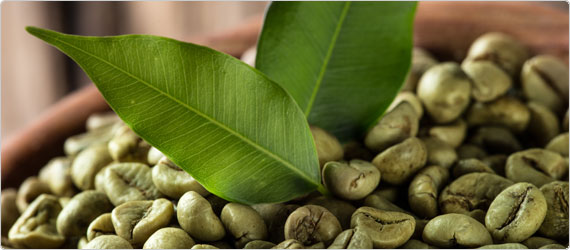 Pure Green Coffee Bean Extract for Weight Loss