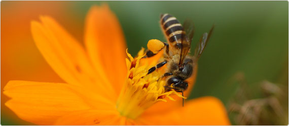 A Buzz about Bee Pollen: Nature's Perfect Food?